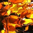 On n'en est pas encore là, mais l'automne arrive et, avec lui, la saison des conventions reprend, avec DivinaSion, Octogônes et Orc'idée.