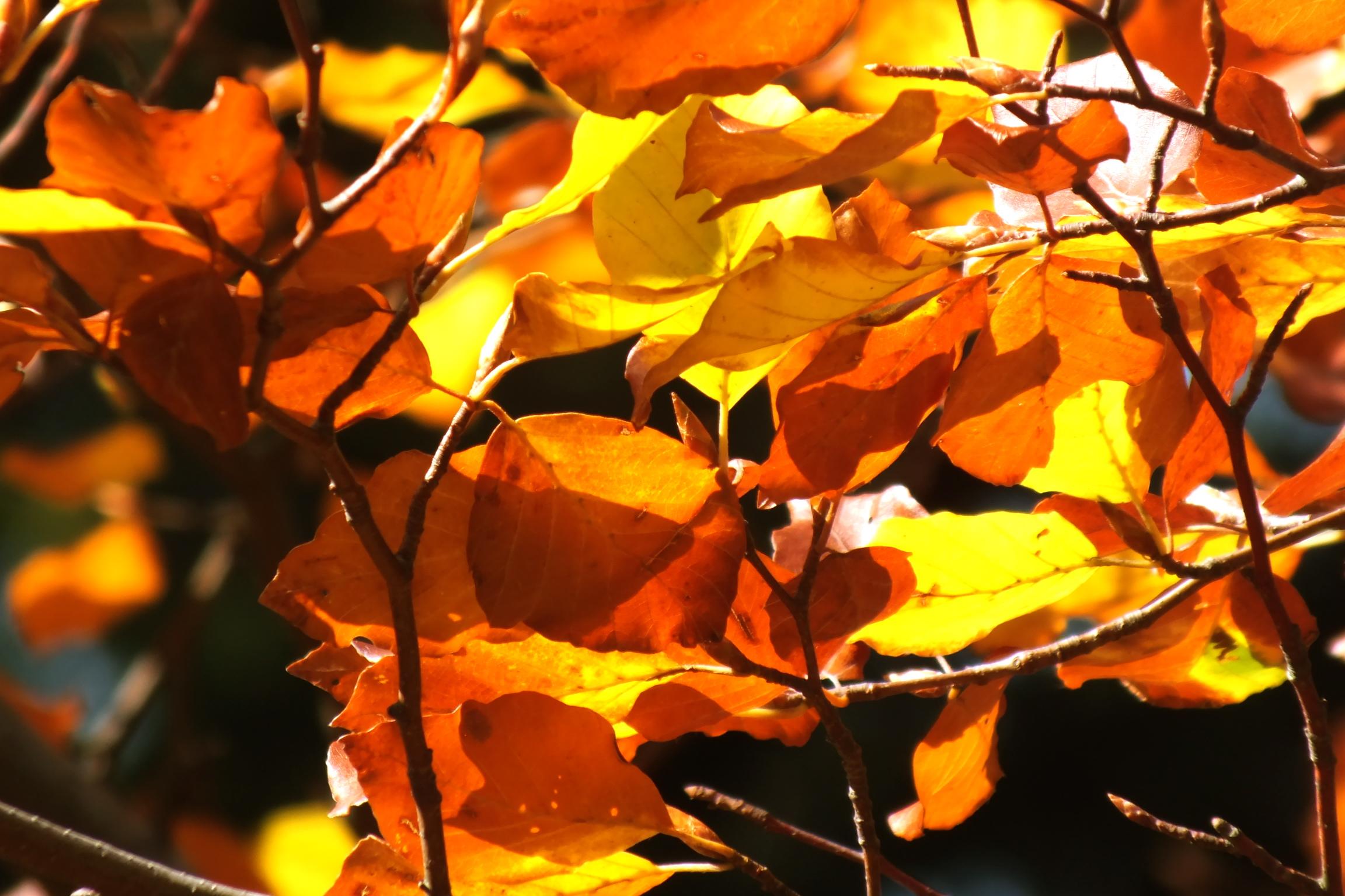 Tournée d'automne